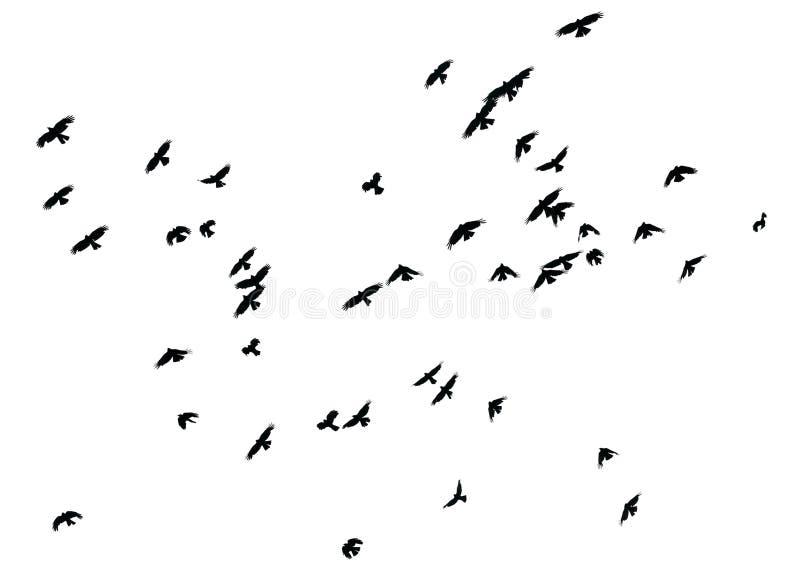 Geïsoleerde troep van vogels op witte achtergrond, stock afbeeldingen