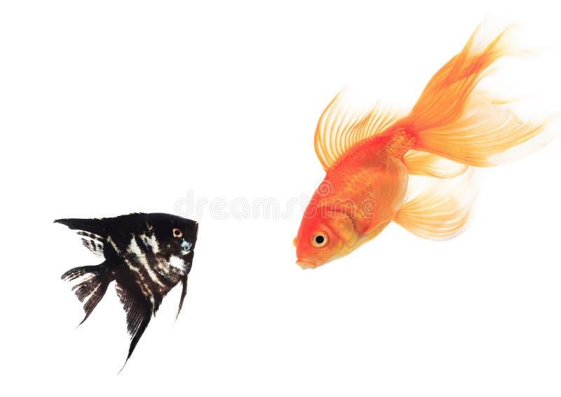 Geïsoleerde vissen royalty-vrije stock foto's