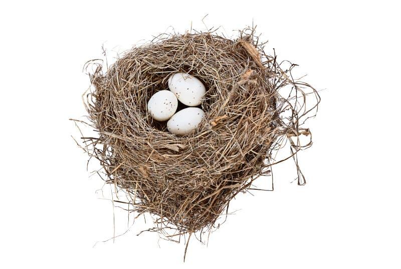 Geïsoleerde vogelnest en eieren stock fotografie