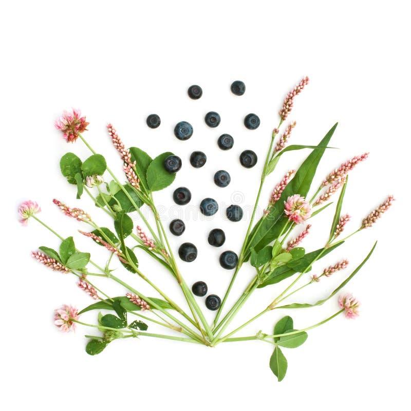 Geïsoleerde weidebloemen en bosbessen stock foto's