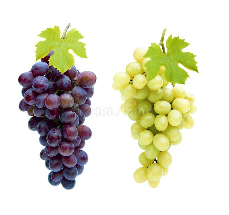 Geïsoleerde wijndruiven stock fotografie
