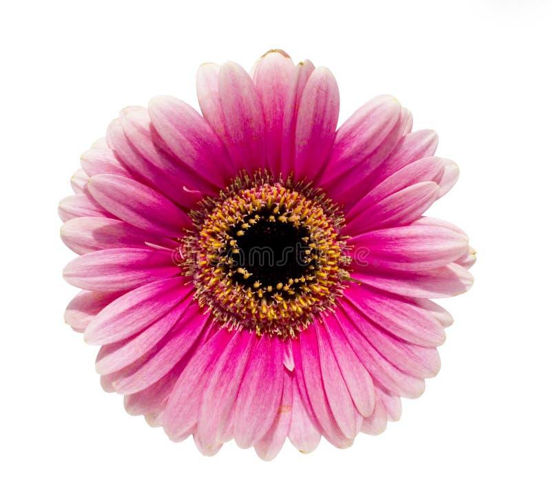 Geïsoleerdea bloem stock afbeeldingen