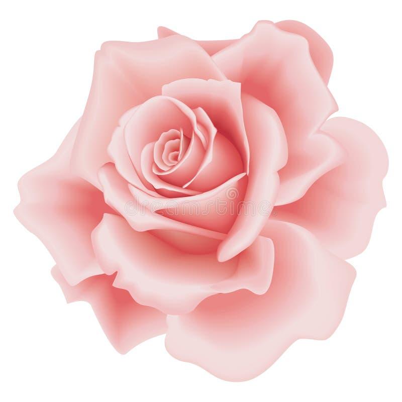 Geïsoleerdea Roze nam toe royalty-vrije illustratie