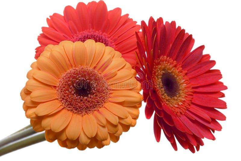 Geïsoleerde bloemen royalty-vrije stock afbeelding
