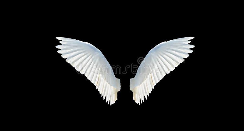 Geïsoleerded vleugels stock foto's