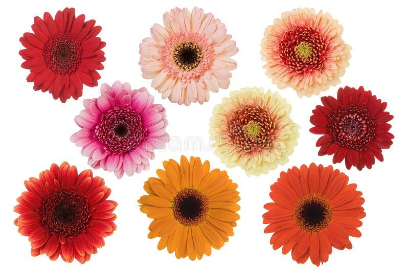 Geïsoleerdee bloemen stock foto's