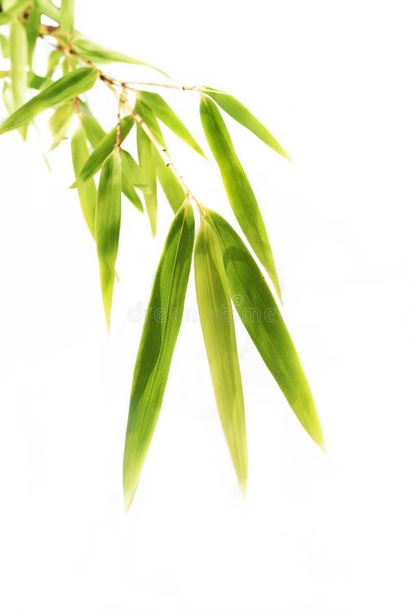 Geïsoleerdee de bladeren van het bamboe royalty-vrije stock foto's