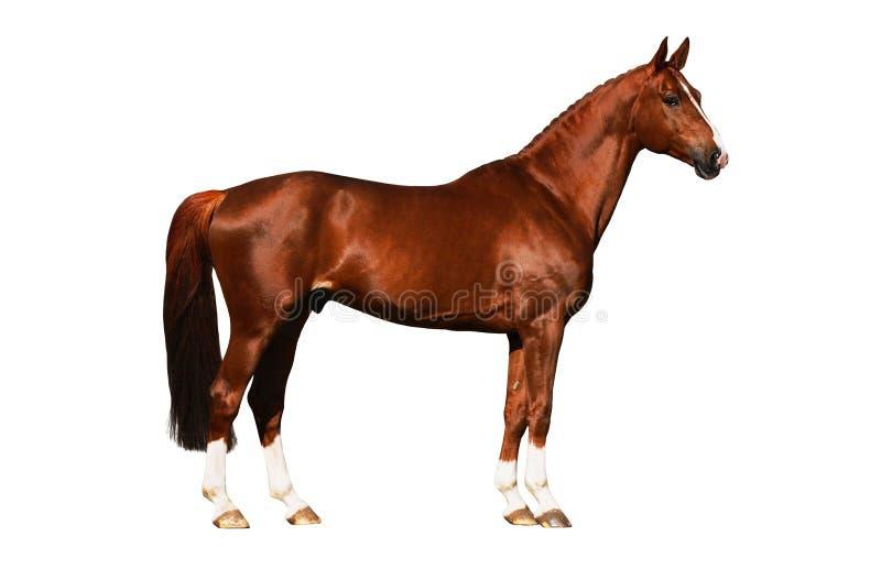 Geïsoleerdee de buitenkant van het paard