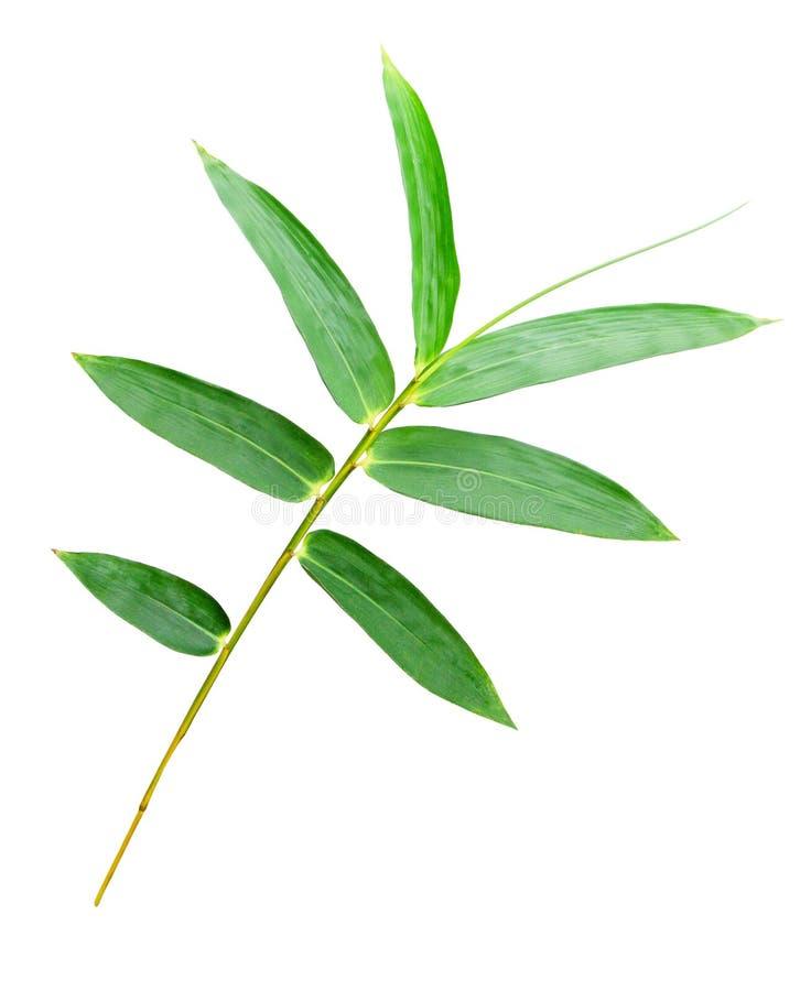 Geïsoleerdee het blad van het bamboe stock afbeeldingen
