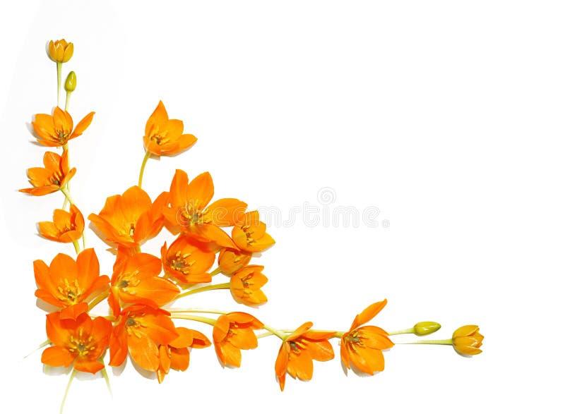 GeïsoleerdeG gele bloemen royalty-vrije stock fotografie