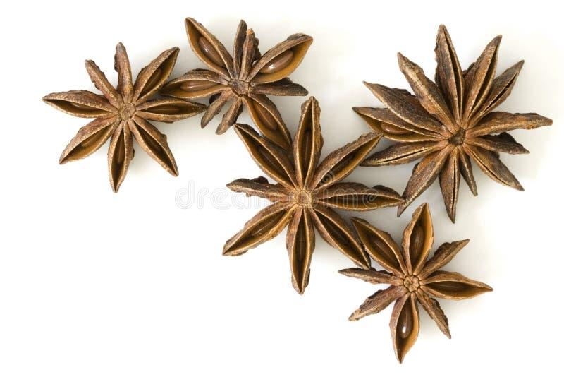 Geïsoleerdeh de anijsplantvruchten van de ster, royalty-vrije stock foto