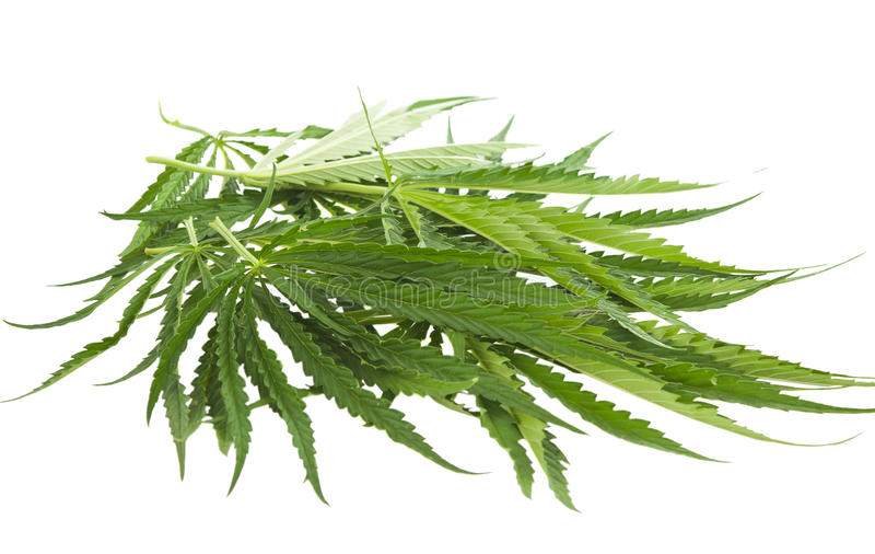 Geïsoleerdei cannabis royalty-vrije stock fotografie