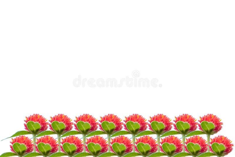Geïsoleerdei rode bloem Strawberry Fields Rode bloemen in de zonsopgang stock illustratie