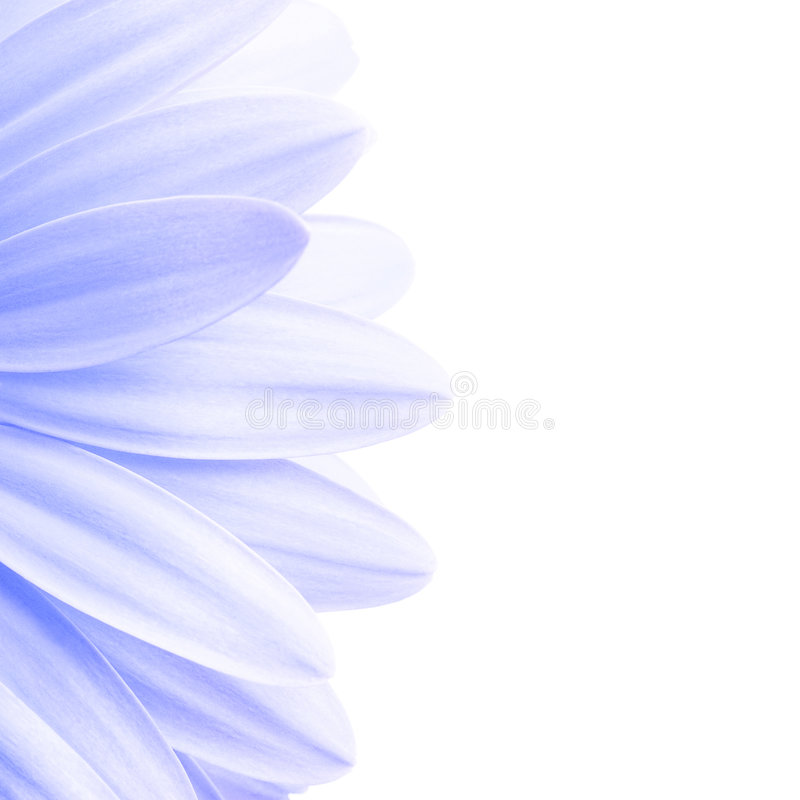 Geïsoleerdel de bloemblaadjeshighkey van de lavendel royalty-vrije stock foto's