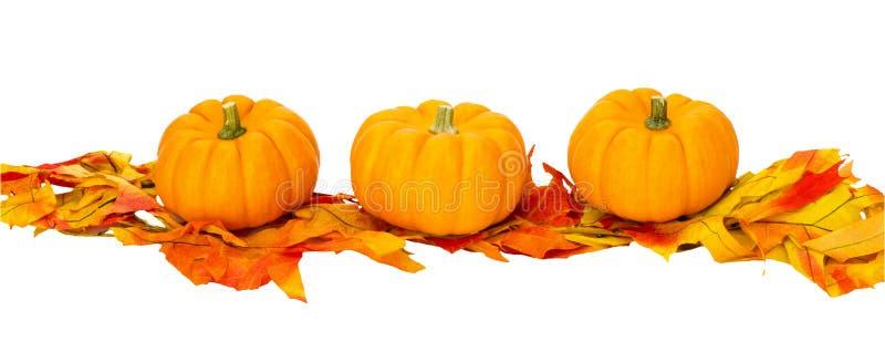 Geïsoleerdel de decoratie van Halloween van de Dankzegging van de daling stock foto