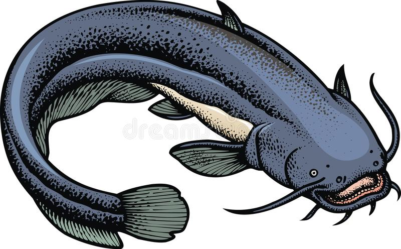 Geïsoleerder katvis stock illustratie