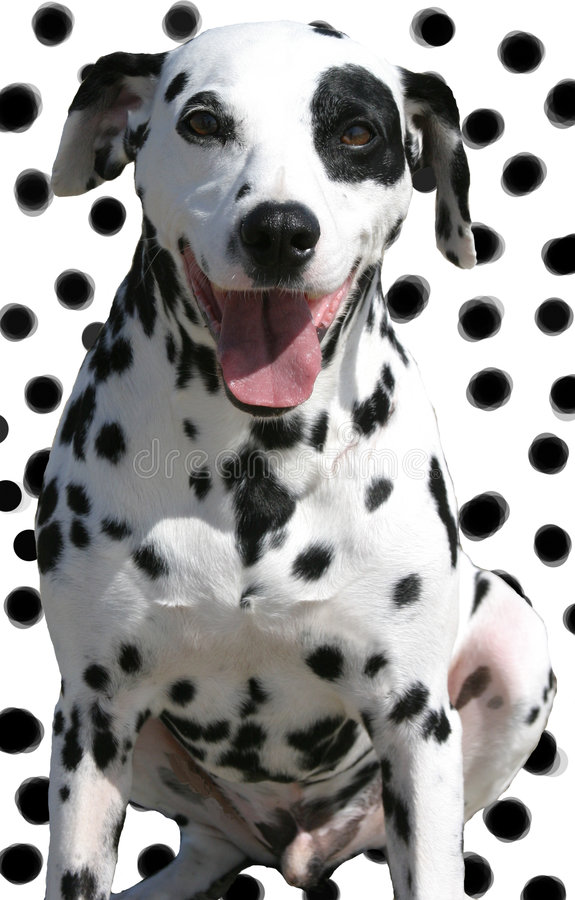 Geïsoleerdes bevlekte hond op bevlekte achtergrond stock foto's