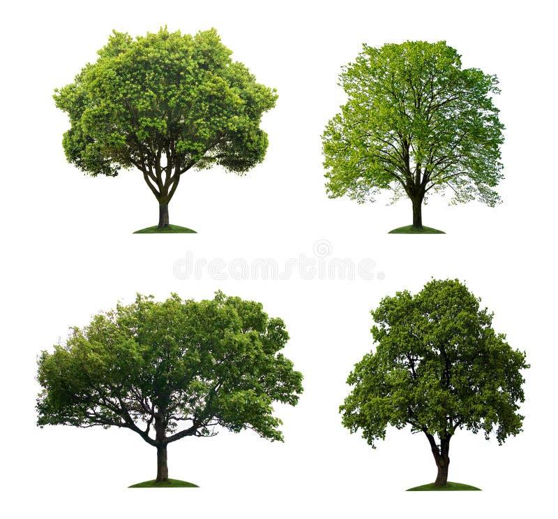 Geïsoleerdes bomen royalty-vrije stock afbeelding