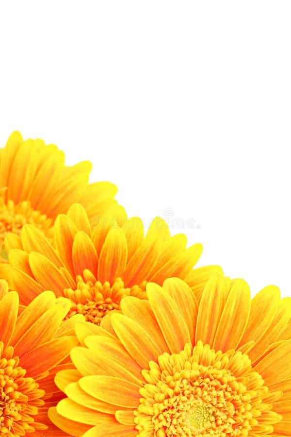 Geïsoleerdes de achtergrond van bloemen stock afbeelding