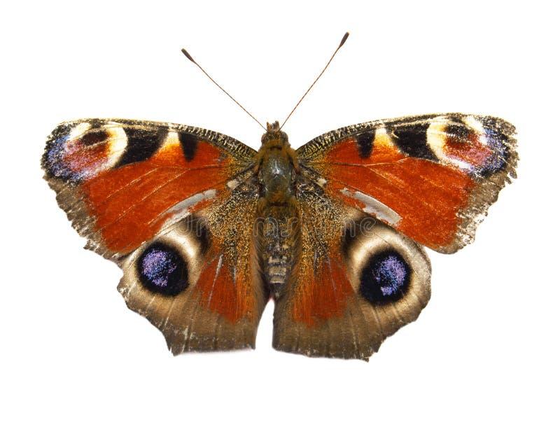 Geïsoleerdes vlinder royalty-vrije stock afbeelding