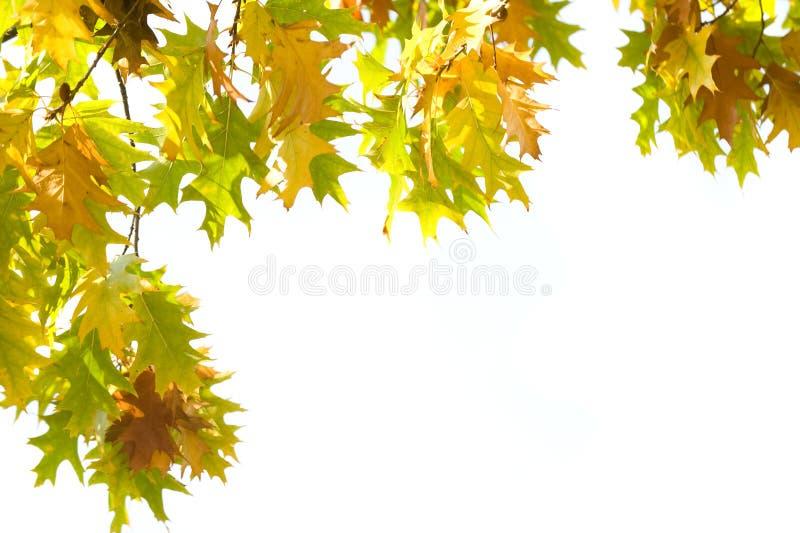 Geïsoleerdet de bladeren van de herfst royalty-vrije stock afbeeldingen