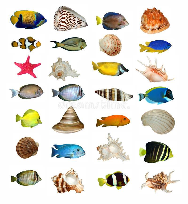Geïsoleerdet Shells en vissen royalty-vrije stock afbeeldingen