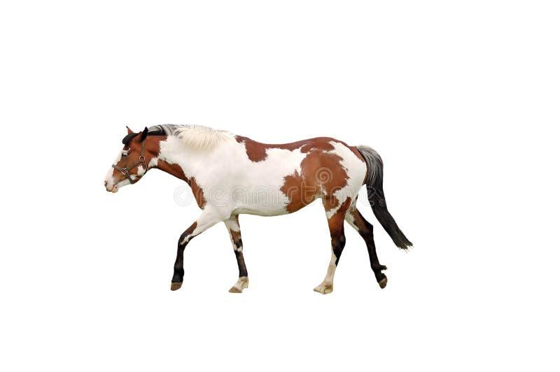 Geïsoleerdm paard royalty-vrije stock foto's