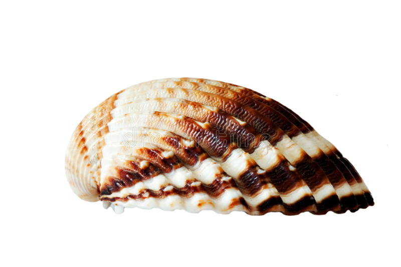 Geïsoleerdn Shell royalty-vrije stock foto