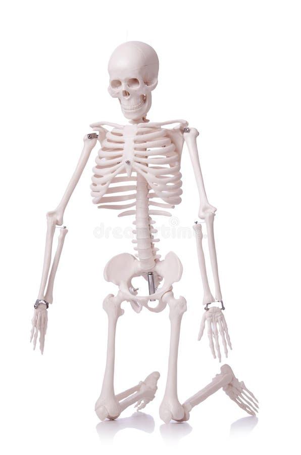 Geïsoleerdp Skelet Royalty-vrije Stock Afbeeldingen