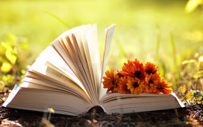 Geöffnetes Buch im gelben Herbst stockfoto