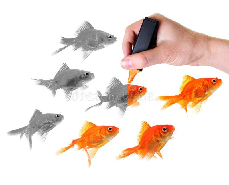 ge guldfiskgrupplivstid till fotografering för bildbyråer