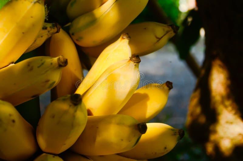 Ge makt att sammanfoga 100 kalorier, socker är kan natur 3, liksom rörsocker, fructose, royaltyfria bilder