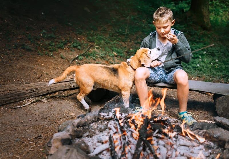 Ge mig dessa sista stycke, behaga! Pojken med beaglehunden har en pic royaltyfri bild