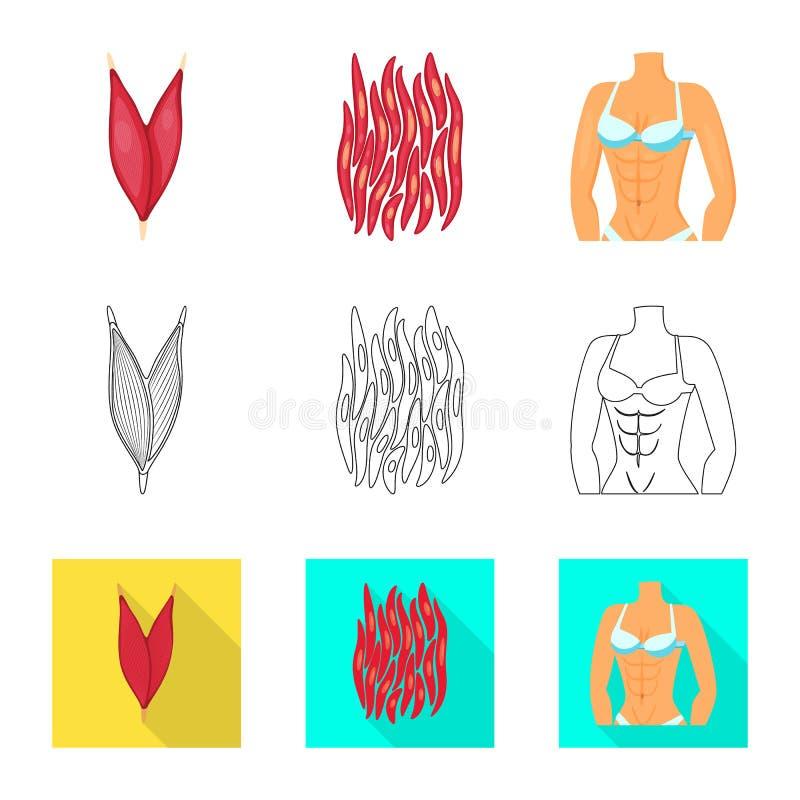 Ge?soleerd voorwerp van vezel en spierpictogram Reeks van vezel en lichaamsvoorraadsymbool voor Web stock illustratie