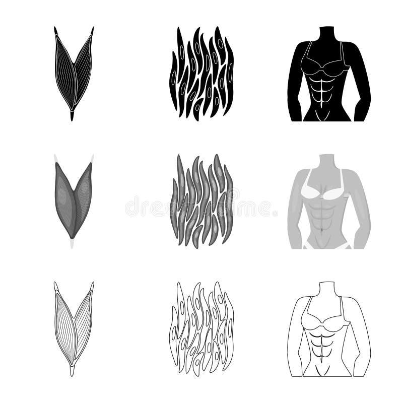 Ge?soleerd voorwerp van vezel en spiersymbool Reeks van vezel en lichaams vectorpictogram voor voorraad vector illustratie