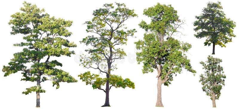 Ge?soleerde Bomen op witte achtergrond, de inzameling van bomen royalty-vrije stock foto