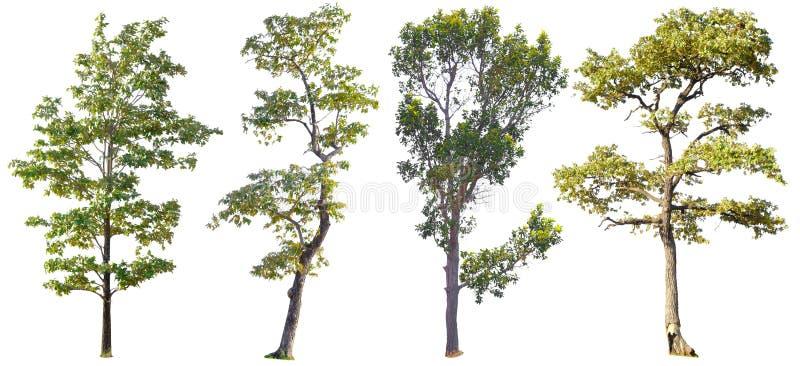 Ge?soleerde Bomen op witte achtergrond, de inzameling van bomen stock afbeelding