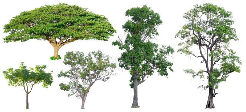 Ge?soleerde Bomen op witte achtergrond, de inzameling van bomen royalty-vrije stock afbeeldingen