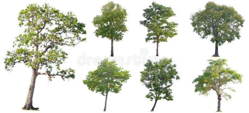 Ge?soleerde Bomen op witte achtergrond, de inzameling van bomen royalty-vrije stock afbeelding