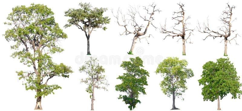 Ge?soleerde Bomen op witte achtergrond, de inzameling van bomen stock foto