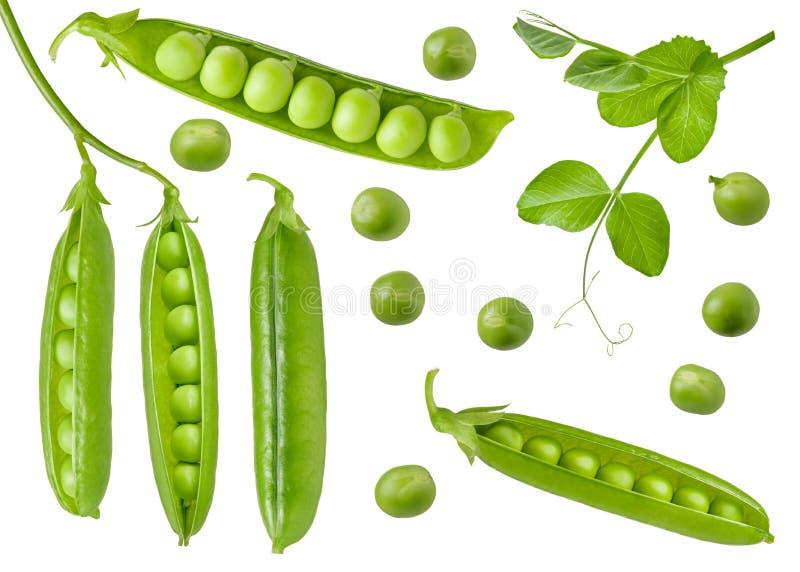 Ge?soleerde Groene erwten Inzameling van groene ruwe peulen en bonen met een open, gesloten en vers blad op stam Detail voor verp royalty-vrije stock afbeeldingen