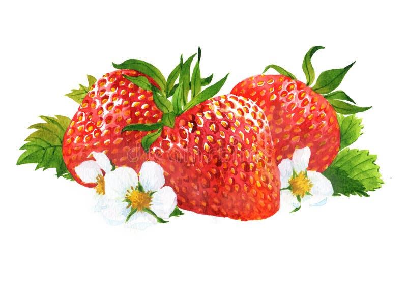 Ge?soleerde waterverfaardbei en gesneden aardbeien stock afbeelding