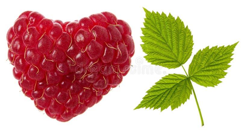 Ge?soleerdee framboos Kies rode rijpe frambozenhart gevormde bes en groen vers blad op witte achtergrond uit royalty-vrije stock foto's