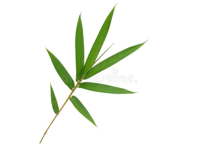 Ge?soleerdee het blad van het bamboe royalty-vrije stock fotografie