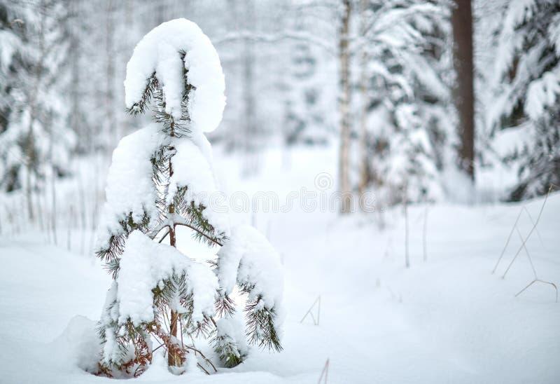 A geada cobriu a árvore imagem de stock royalty free