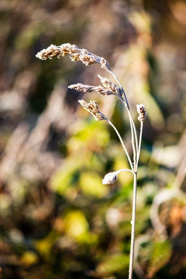a geada cobriu as folhas da grama e da ?rvore na luz ensolarada da manh? do inverno foto de stock