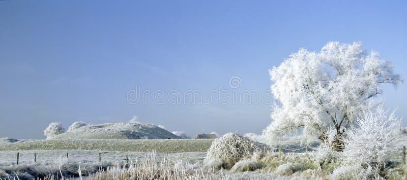 A geada cobriu a paisagem foto de stock royalty free