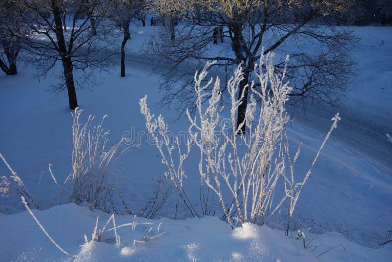 Geada do Hoar na grama murcho, o 19 de janeiro de 2013 Upsália, Sweden fotos de stock