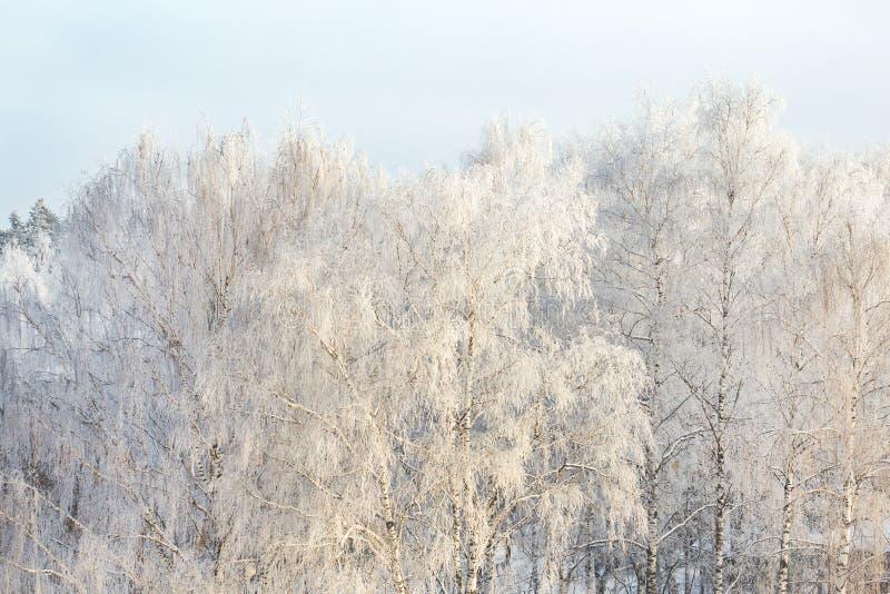 A geada do inverno em ramos de árvore molda completamente o fundo puro do inverno foto de stock