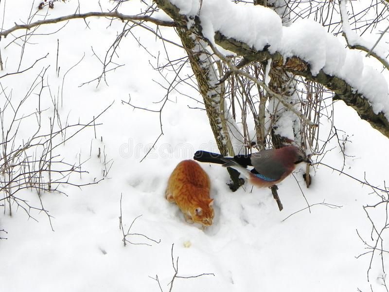 Geai d'oiseau se reposant sur une branche Bel oiseau en nature D?tails et plan rapproch? photographie stock libre de droits
